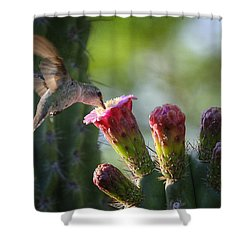 Hummingbird Breakfast Southwest Style  Shower Curtain by Saija  Lehtonen