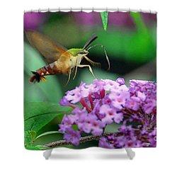 Hummingbird Clearwing Moth Shower Curtain by Gary Keesler