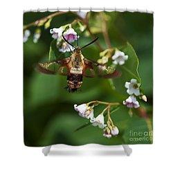 Hummingbird Clearwing... Shower Curtain by Nina Stavlund
