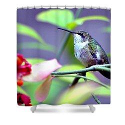 Shower Curtain featuring the photograph Hummingbird by Deena Stoddard