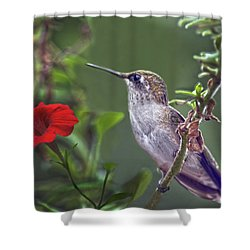 Hummingbird Delight Shower Curtain by Sandi OReilly