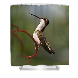 Hummingbird Eloquent Appeal Shower Curtain by Christina Rollo