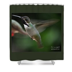 Shower Curtain featuring the photograph Hummingbird Male Anna In Flight Over Perch by Jay Milo