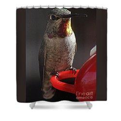 Shower Curtain featuring the photograph Hummingbird Female Anna by Jay Milo
