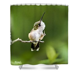 Shower Curtain featuring the photograph Hummingbird Flexibility by Christina Rollo