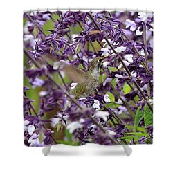 Hummingbird Flowers Shower Curtain