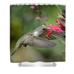 Hummingbird Heaven  Shower Curtain by Saija  Lehtonen