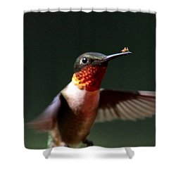 Hummingbird - Hitching A Ride - Ruby-throated Hummingbird Shower Curtain by Travis Truelove