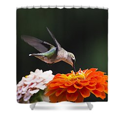 Shower Curtain featuring the photograph Hummingbird In Flight With Orange Zinnia Flower by Christina Rollo