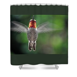 Shower Curtain featuring the photograph Hummingbird In Flight Male Anna by Jay Milo