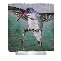 Hummingbird Shower Curtain by Kume Bryant
