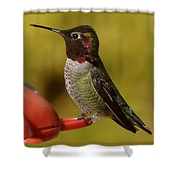 Hummingbird Male Allan Shower Curtain by Jay Milo