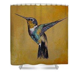 Hummingbird Shower Curtain by Michael Creese