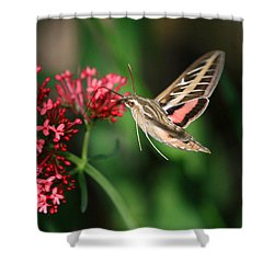Hummingbird Moth Shower Curtain by Donna Kennedy