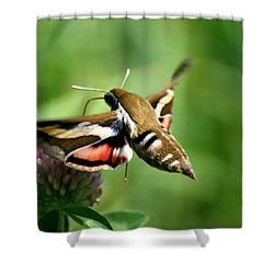 Hummingbird Moth From Behind Shower Curtain