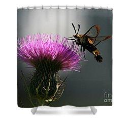 Hummingbird Moth II Shower Curtain by Douglas Stucky
