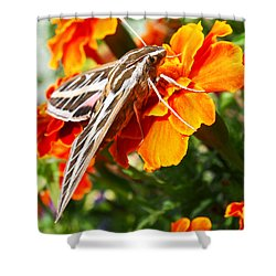 Hummingbird Moth On A Marigold Flower Shower Curtain