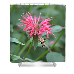 Hummingbird Moth Shower Curtain by Richard Bryce and Family