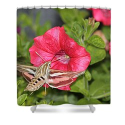 Hummingbird Moth Shower Curtain by Tiffany Erdman