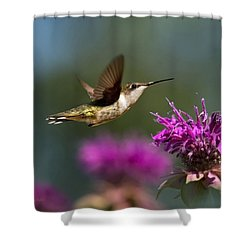 Shower Curtain featuring the photograph Hummingbird Moving Along by Christina Rollo