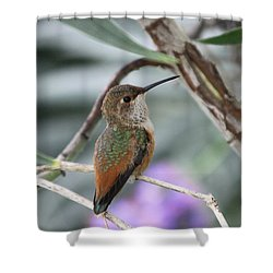 Hummingbird On A Branch Shower Curtain