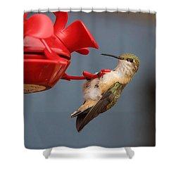 Hummingbird On Feeder Shower Curtain by Alan Hutchins