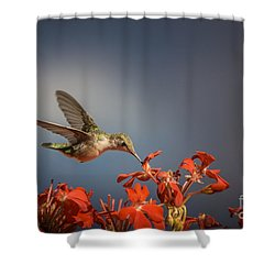 Hummingbird Or My Summer Visitor Shower Curtain