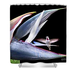 Shower Curtain featuring the photograph Hummingbird Paradise by Jennie Breeze