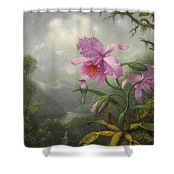 Hummingbird Perched On The Orchid Plant Shower Curtain by Martin Johnson Heade