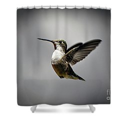Hummingbird Shower Curtain by Savannah Gibbs