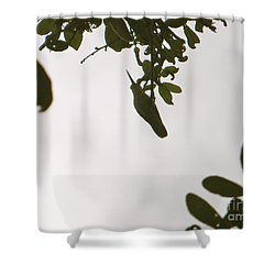 Shower Curtain featuring the photograph Hummingbird Silhouette 1 by Joy Hardee