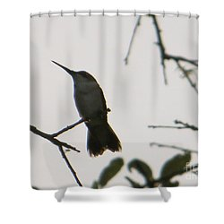 Hummingbird Silhouette 2 Shower Curtain