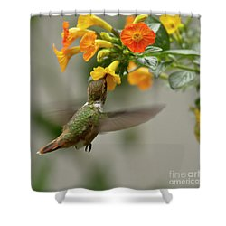 Hummingbird Sips Nectar Shower Curtain by Heiko Koehrer-Wagner
