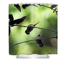 Shower Curtain featuring the digital art Hummingbird Tree by Lizi Beard-Ward