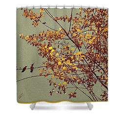 Hummingbirds On Yellow Tree Shower Curtain