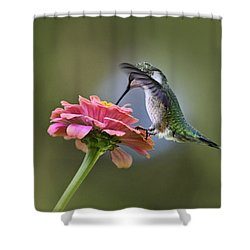 Hummingbirds Pure Goodness Shower Curtain by Christina Rollo