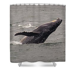Shower Curtain featuring the photograph Humpback Whale Breaching by Janis Knight