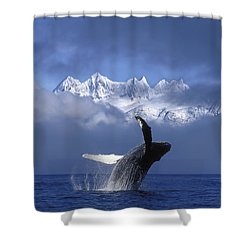 Humpback Whale Breaches In Clearing Fog Shower Curtain by John Hyde