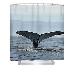 Humpback Whale Tail 3 Shower Curtain