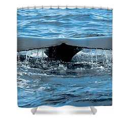 Humpback Whale Tail Off Bermuda Shower Curtain by Jeff at JSJ Photography