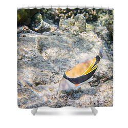 Humuhumunukunukuapua'a Shower Curtain by Denise Bird