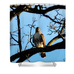Shower Curtain featuring the photograph Hungry by Ally  White
