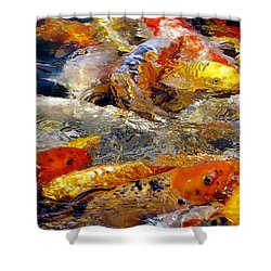 Hungry Koi Shower Curtain