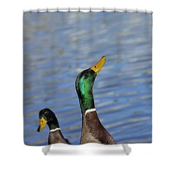 Hungry Duck Shower Curtain