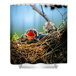 Hungry Tree Swallow Fledgling In Nest Shower Curtain by Bob Orsillo