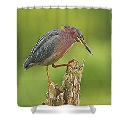 Hunting Green Heron Shower Curtain