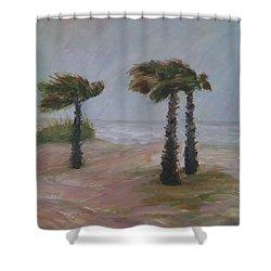 Hurricane Palms Shower Curtain