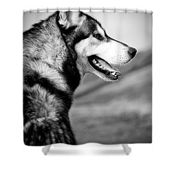 Husky Portrait Shower Curtain