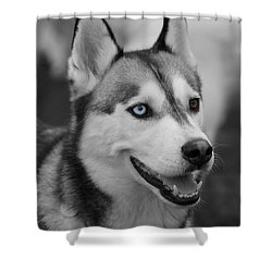 Shower Curtain featuring the photograph Husky Portrait by Vicki Spindler