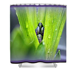 Shower Curtain featuring the photograph Hyacinth For Micah by Katie Wing Vigil